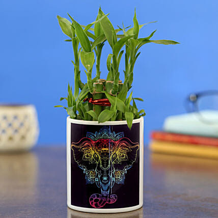 2 Layer Bamboo Plant In Beautiful Printed Planter
