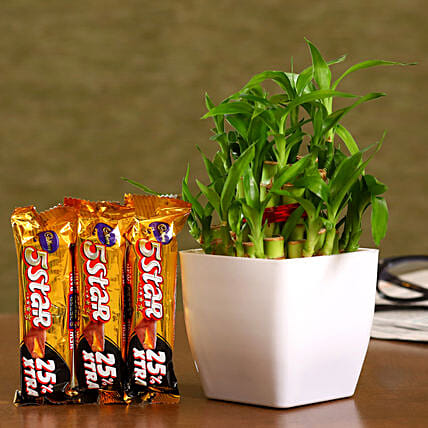 Bamboo Plant Cadbury 5 Star Combo Hand Delivery