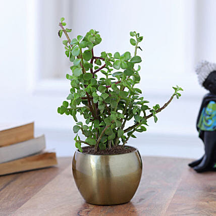 Jade Plant In Gold Tone Metal Pot Hand Delivery