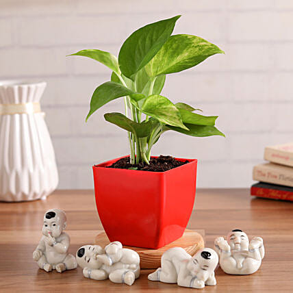 Lucky Money Plant With Baby Buddha Figurines Hand Delivery