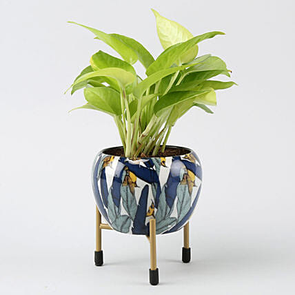 Neon Pothos Plant In Leaf Printed Metal Pot Hand Delivery