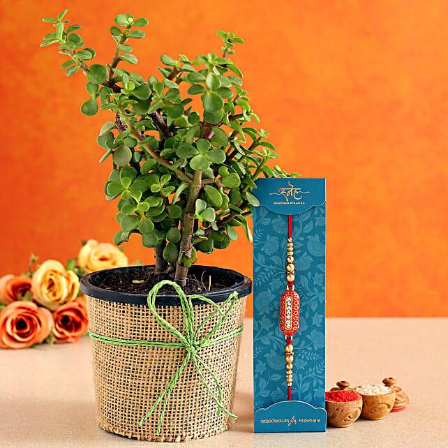 Capsule Rakhi Jade Plant