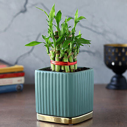 2 Layer Bamboo Plant In Teal Blue Gold Plate Pot