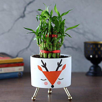 2 Layer Bamboo Plant In White Orange Reindeer Pot:Bamboo Plants