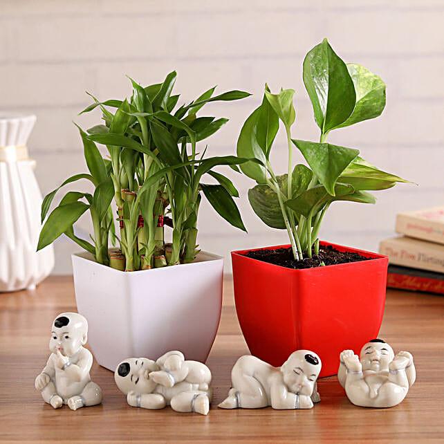 Lucky Plants & Budhhas Combo:Desktop Plant