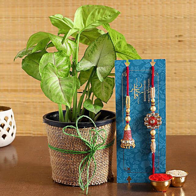 Bhaiya Bhabhi Rakhi Set N Syngonium Plant