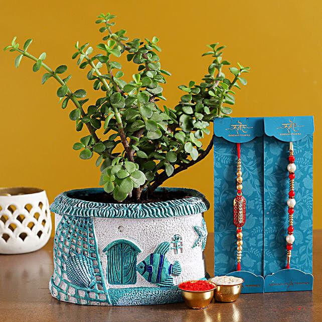 Set of 2 Rakhi N Jade Plant