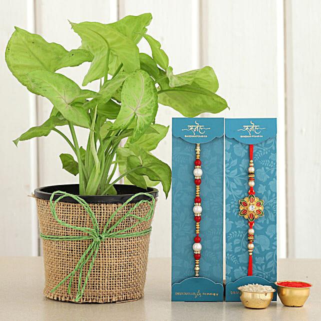 Rakhi Set & Syngonium Plant
