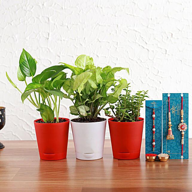 Bhaiya Bhabhi And Pearl Rakhi With Plants In Vibrant Pots