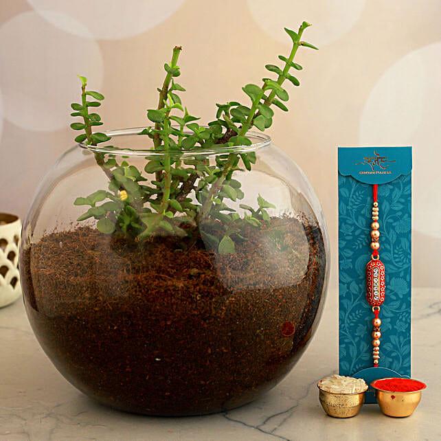 Designer Rakhi And Jade Plant In Round Vase