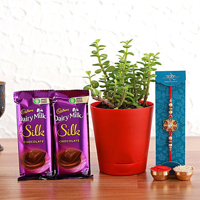 Meenakari Rakhi And Jade Plant With Cadbury Silk