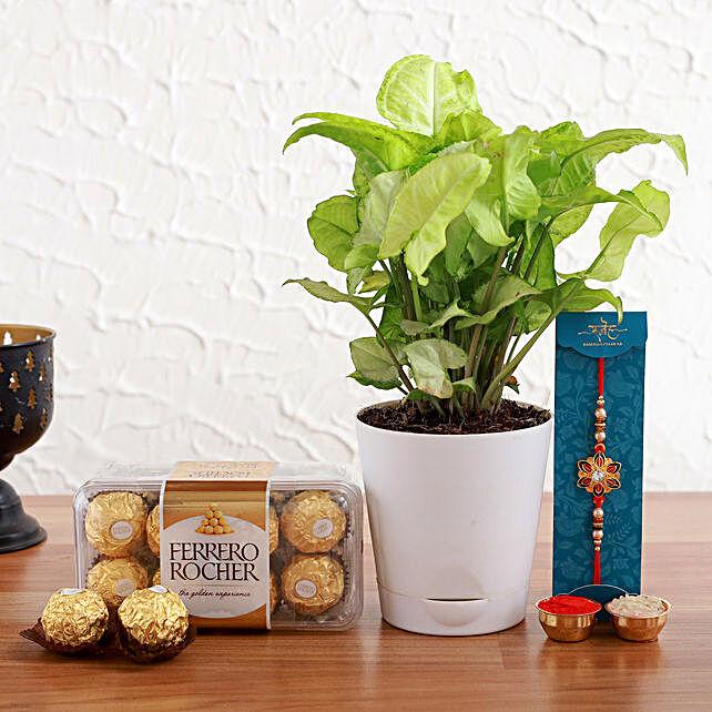 Meenakari Rakhi And Syngonium Plant With Ferrero Rochers