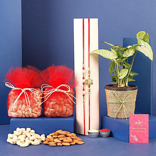 Set of 2 Rakhi And Syngonium Plant With Dry Fruits