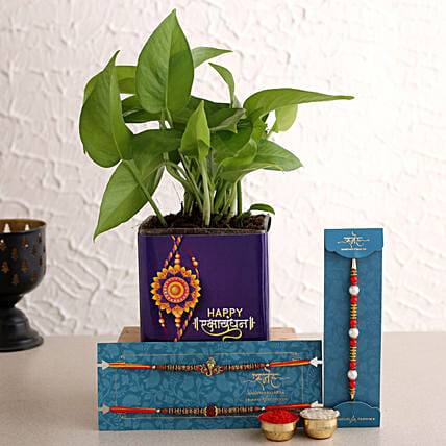 Set of 3 Rakhi And Money Plant In Happy Rakhi Vase