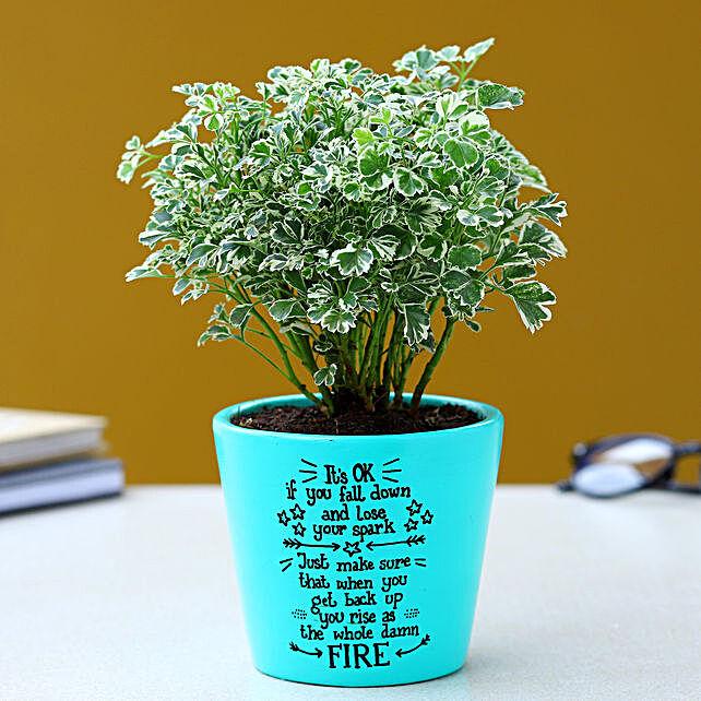 Aralia Plant In Illustrative Quote Aqua Green Pot:Hand Painted planters