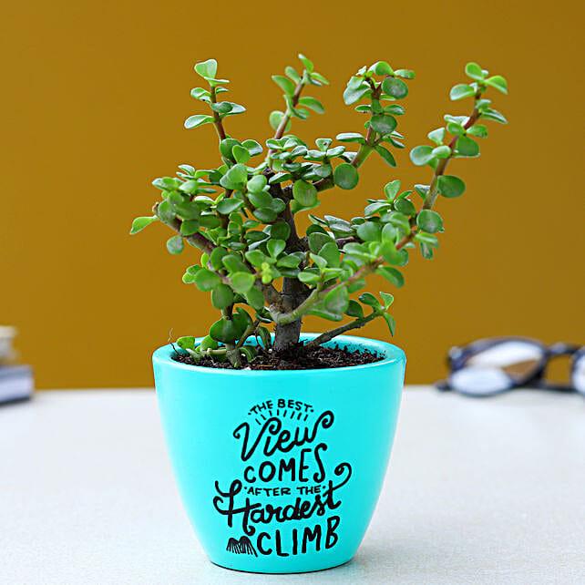 Jade Plant In Illustrative Aqua Green Pot
