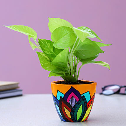 Neon Pothos Plant In Multicoloured Leaves Yellow Pot:Hand Painted planters