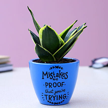 Sansevieria Plant In Illustrative Quote Marine Blue Pot:Hand Painted planters