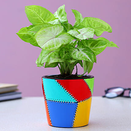 Syngonium Plant In Patch Stitch Multicoloured Pot