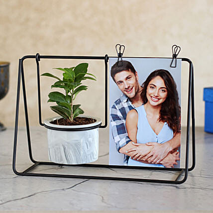 Ficus Compacta Plant Black Hanging Stand N Photo Clips
