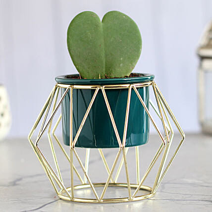 Hoya Plant Green Pot With Golden Octagon Stand