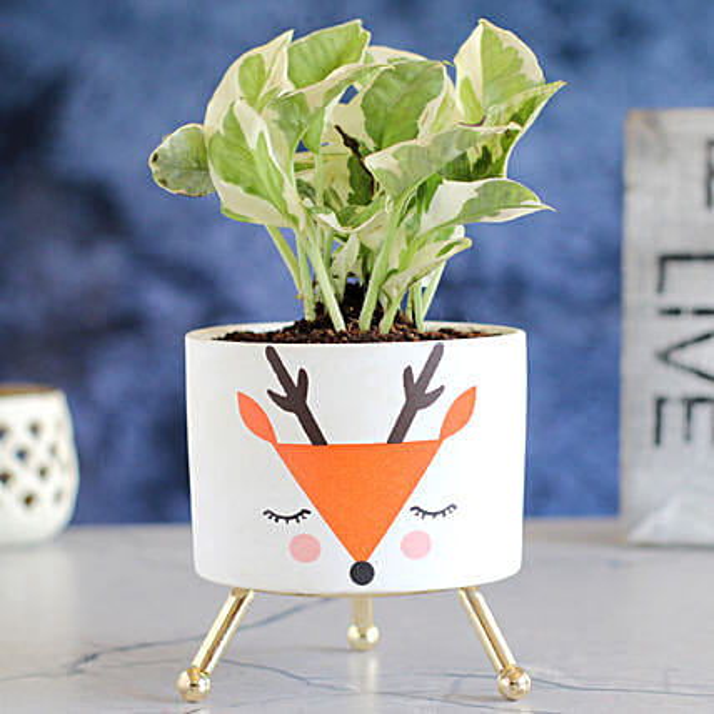 White Pothos Plant In Beautiful Reindeer Pot