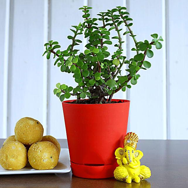 Ganesha Idol N Jade Plant With Besan Laddoo