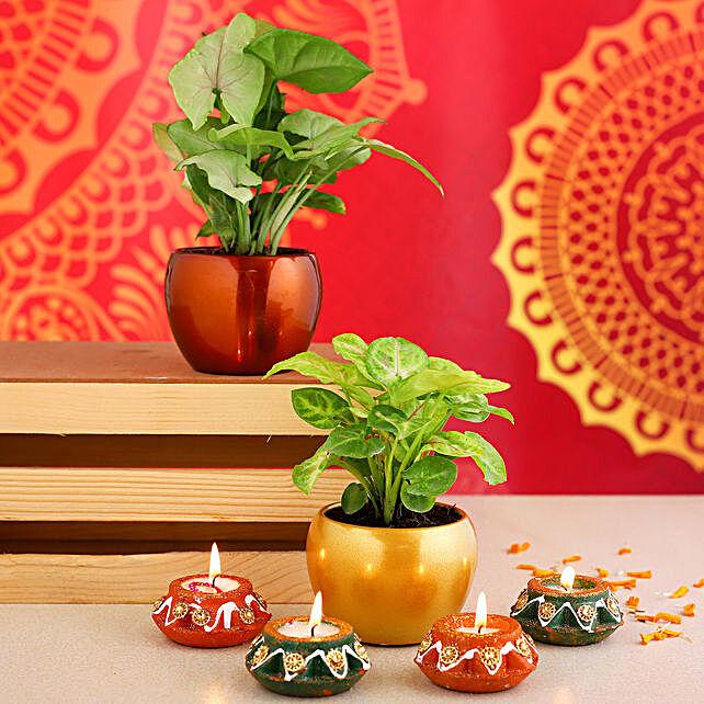 Set Of 2 Syngonium Plants & Matki Diyas