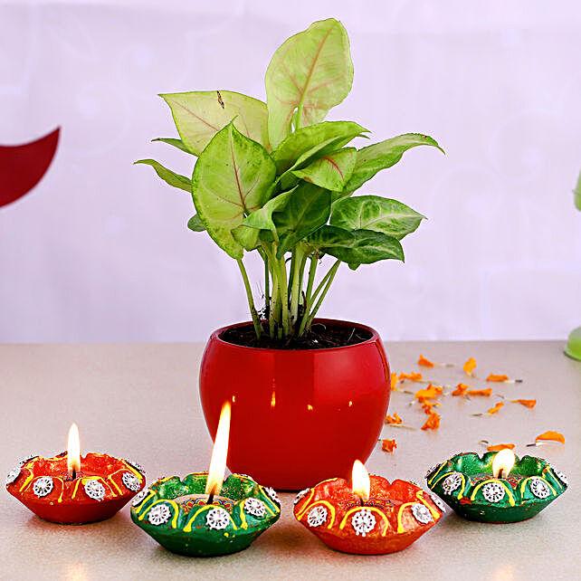 Syngonium Plant Red Pot & Designer Diyas:Diwali Plants