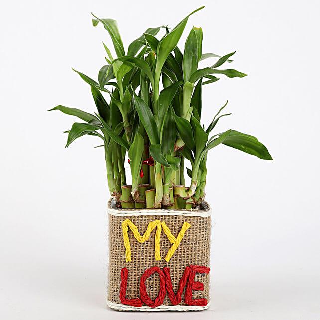 Valentine Plant for Love