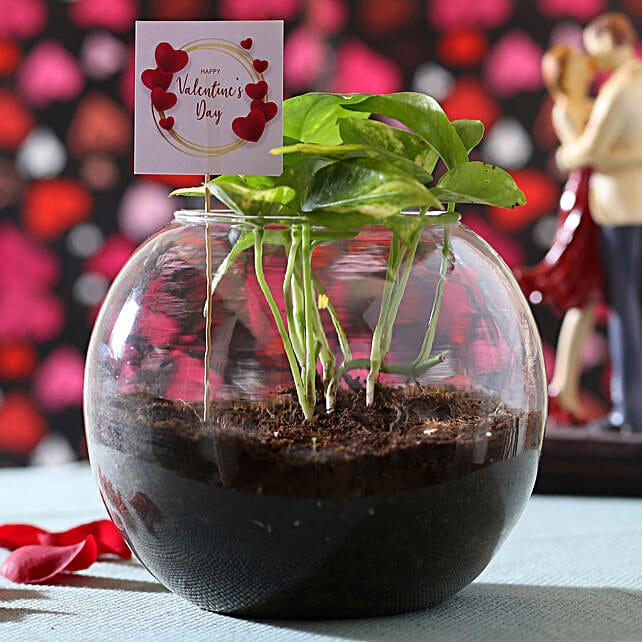 Online Valentine's Money Plant:Valentine Plants