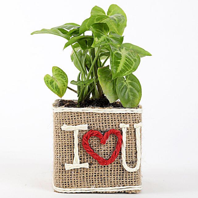 Love Printed Pot Plant