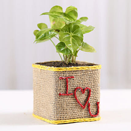 Love Printed Plant Online:Plants Delivery
