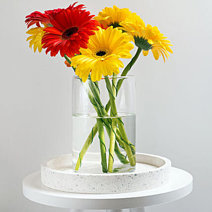 Welcoming Gerbera Blossom Vase