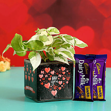 White Pothos In Sticker Vase With Dairy Milk Hand Delivery