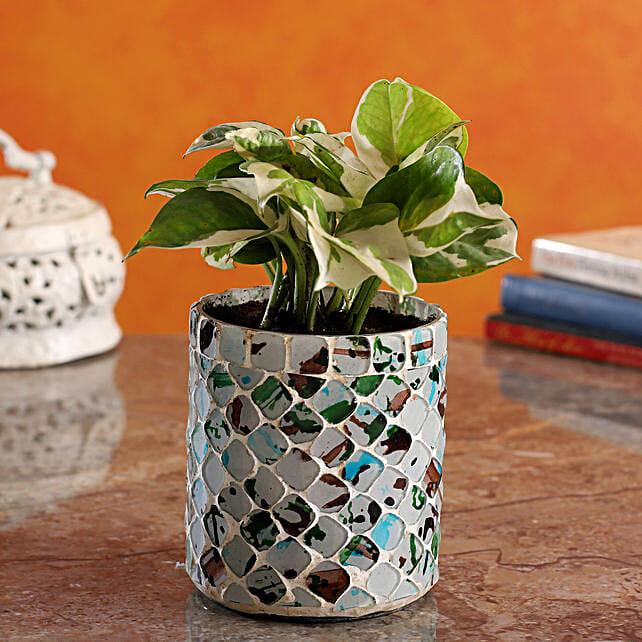 White Pothos Plant In Distressed Tone Mosaic Vase