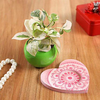 White Pothos Plant In Green Pot And Pink Heart Plate