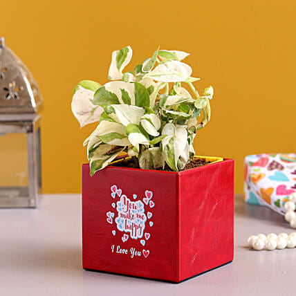 White Pothos Plant In Love You Red Pot