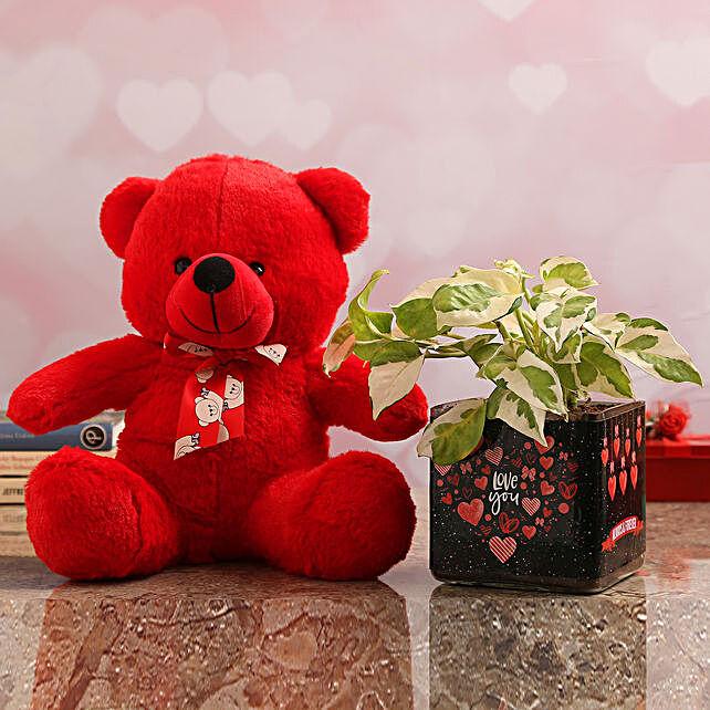 White Pothos Plant In Love You Vase & Teddy