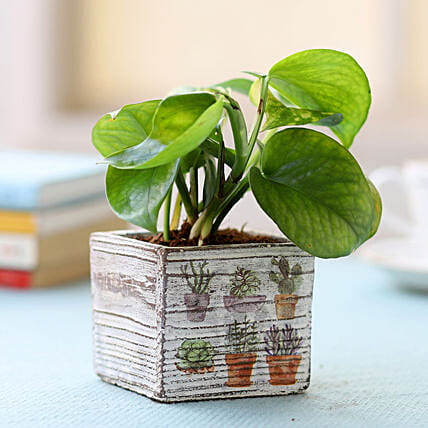 White Potted Money Plant