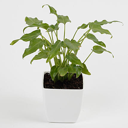 green plant for home décor