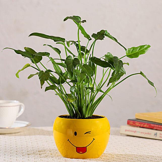 Xanadu Plant In Emoji Printed Pot