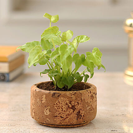 Xanadu Plant In Round Cork Planter