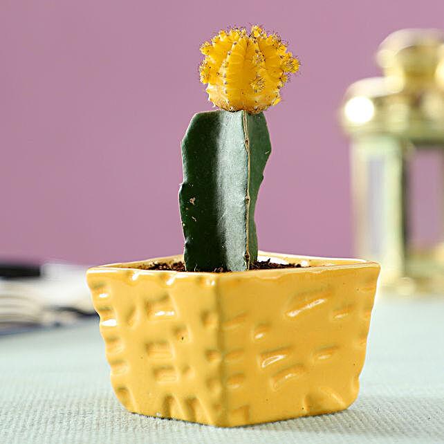 cactus plant in planter online