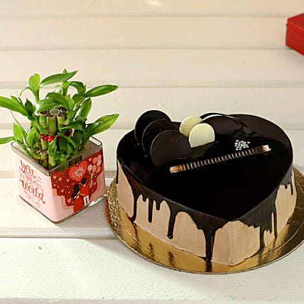 Chocolate Cake & Plant Combo for Wife