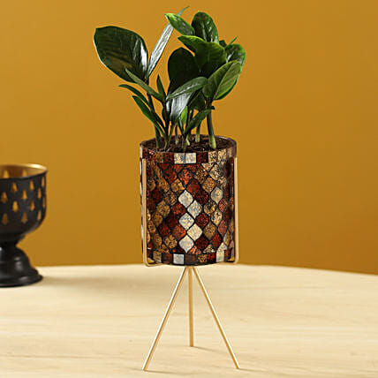 Zamia Plant In Diamond Cut Pot With Stand