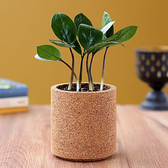 Zamia Plant In Pipe Shape Planter
