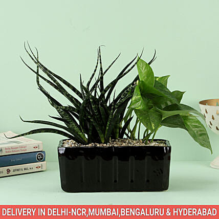 Plant with Black Planter Online