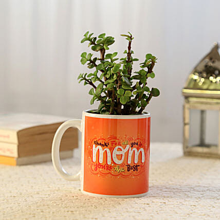 Online Jade Plant For Mom:Send Mother's Day Plants