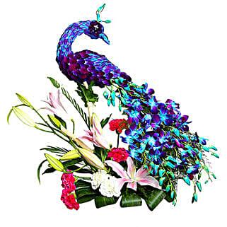 Adorable & Charming Peacock